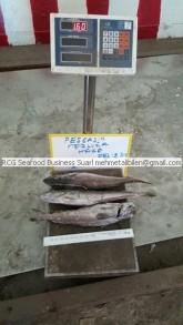 frozen on board hake exporter