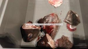 Big size grouper heads