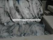 congele sepia officinalis