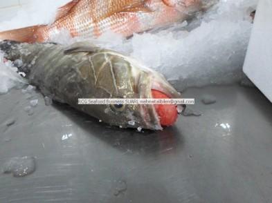 white grouper - rcg seafood