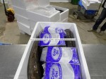 Turkish Quality Seafoods