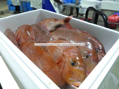 West African Exotic Fish Species