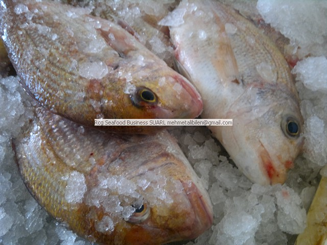 Fresh Dorade – PagrusPagrus