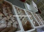 fresh fish supplier for Tel Aviv