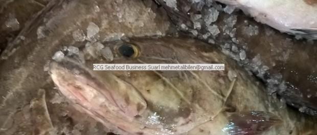 Lahoz, Lahoz balığı, Girida balığı, Kayahanisi balığı