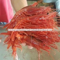 deep sea red shrimp-gambero rosso