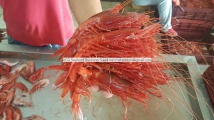 deep sea red shrimp-gambero rosso
