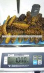 dried sea cucumber exporter
