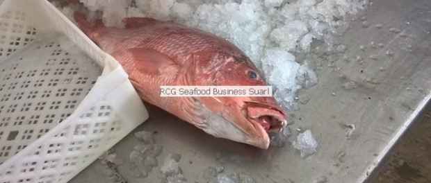 red snapper from Senegal