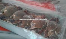 frozen blue crab
