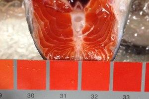 fresh,frozen atlantic salmon