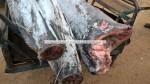 frozen on board black marlin
