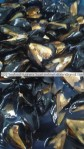 Black Mussel Meat from Turkey