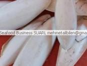 Senegal cuttlefish bones